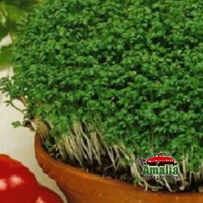Plante aromatice de la Dor de Verde (KP294 seminte de loboda de gradina krause 1 290x290)   imagine reteta