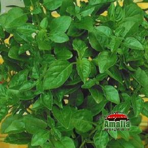 Plante aromatice de la Dor de Verde (KP5171 seminte de busuioc lamaios 1 290x290)   imagine reteta